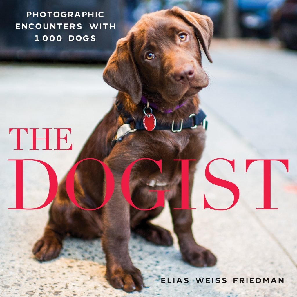 12 BEAUTIFUL COFFEE TABLE BOOKS FOR DOG LOVERS - Hey, Djangles. heydjangles.com - Dog coffee table books, dog decor, The Dogist - Elias Weiss Friedman