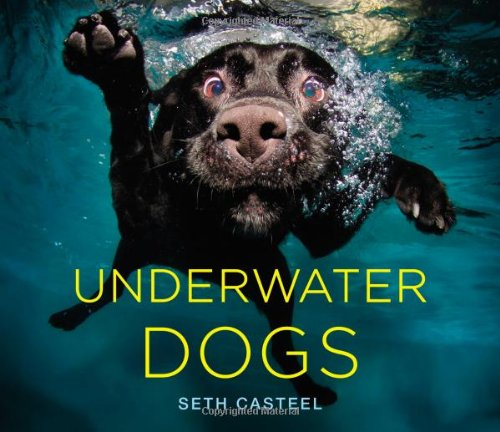 12 BEAUTIFUL COFFEE TABLE BOOKS FOR DOG LOVERS - Hey, Djangles. heydjangles.com - Dog coffee table books, dog decor, Underwater Dogs - Seth Casteel
