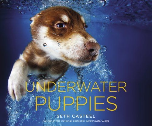 12 BEAUTIFUL COFFEE TABLE BOOKS FOR DOG LOVERS - Hey, Djangles. heydjangles.com - Dog coffee table books, dog decor, Underwater Puppies - Seth Casteel
