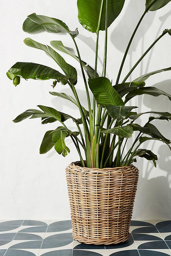 Rattan Basket Planter Anthropologie