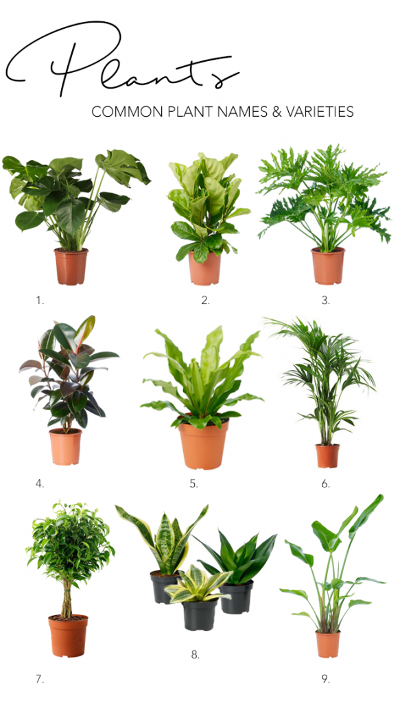 When creating your modern minimalist living room, don't forget to include a bit of nature! Common house plant names and varieties include Monstera, Fiddle-leaf fig, Philodendron, Rubber tree, Birds nest fern, Parlour Palm. Weeping fig, Sansevieria and Bird of Paradise. #houseplants #indoorplants