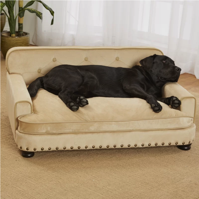 lounge dog bed, black lab resting in bed, dog room decor