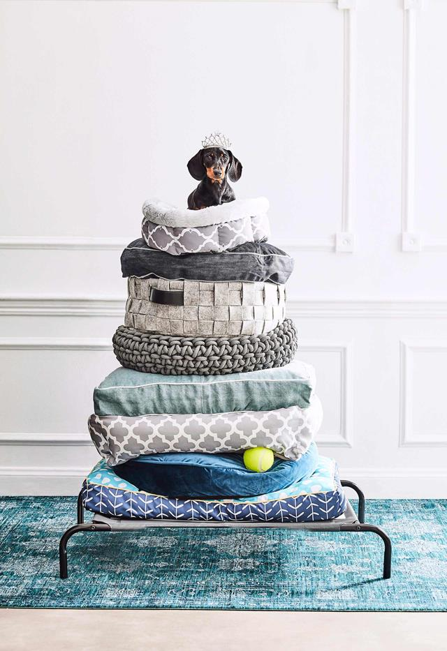 NON-NEGOTIABLE DOG ROOM DECOR ESSENTIALS – heydjangles.com – From dog bowls, pet beds, toys and tech, to pet gates, crates, dog doors and more. Check out our dog room decor wrap-up for all the best dog room decorating ideas and inspiration. Dog princess and the pea, dachshund, wiener dog. Photo credit: Will Horner (Homes to Love).