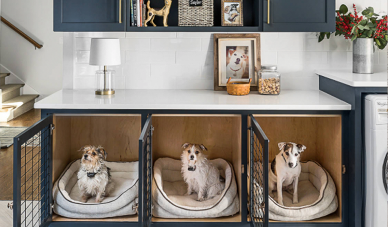 Non Negotiable Dog Room Decor Essentials Hey Djangles