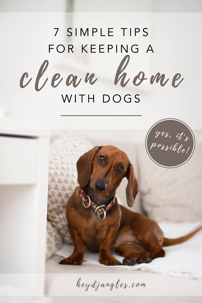 7 Simple Tips to Keeping a Clean Home With Dogs – It is possible! How to keep a clean home with pets, dog cleaning hacks, cleaning tips for dog owners, keeping a clean home with 3 dogs and a cat, no more pet hair, dog smell be gone, dachshund #cleanhouse #doghacks #livingwithdogs