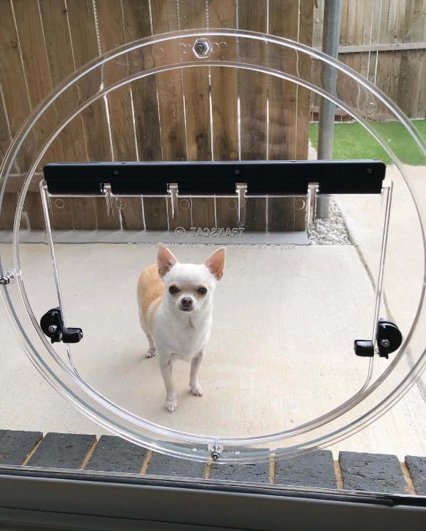 25+ STYLISH DOG DOOR IDEAS FOR THE DISCERNING PET OWNER - Hey, Djangles. Glass dog door, circle pet door, dog door for sliding glass door, Chihuahua. Image: @lillian_the_chihuahua