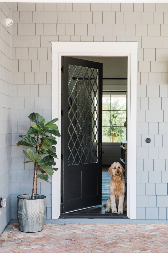 25+ STYLISH DOG DOOR IDEAS FOR THE DISCERNING PET OWNER - Hey, Djangles. Dog at front door, fiddle leaf fig entryway, gray wall shingles, farmhouse entryway, Groodle dog. Image: Rafterhouse.