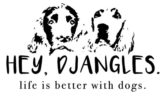 Non-negotiable Dog Room Decor Essentials - Hey, Djangles