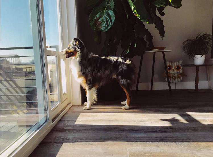 25+ STYLISH DOG DOOR IDEAS FOR THE DISCERNING PET OWNER - Hey, Djangles. Sliding glass door dog door, glass door pet door, exterior door with built in pet door, Australian Shepherd. Image: @petdoorproducts