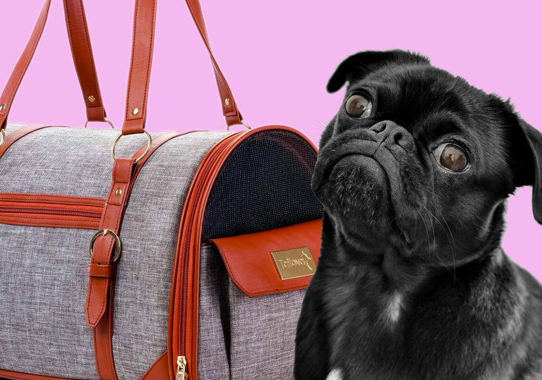 stylish dog carriers that look like purses, pug