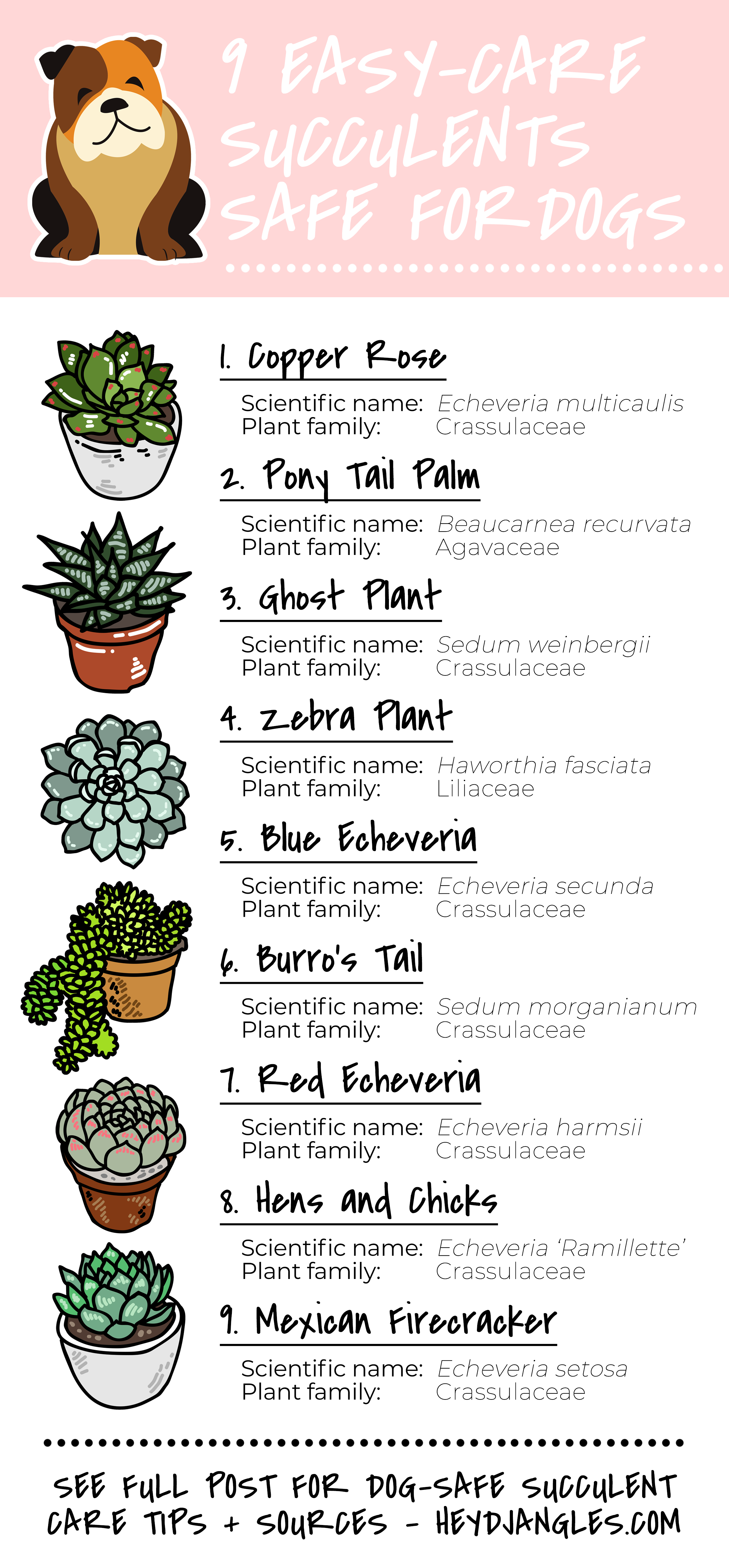 9 Low-Maintenance Indoor Succulents That Are Safe For Dogs - Hey, Djangles. Pet-friendly succulent, non-toxic plants to dogs, dog-friendly succulent, easy-care house plants, Copper Rose, Pony Tail Palm, Ghost Plant, Zebra Plant, Blue Echeveria, Burro's Tail, Red Echeveria, Mexican Firecracker, Hens and Chicks.