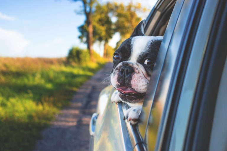 8 Tips For Planning A Cross Country Road Trip With Your Dog – Hey,Djangles.