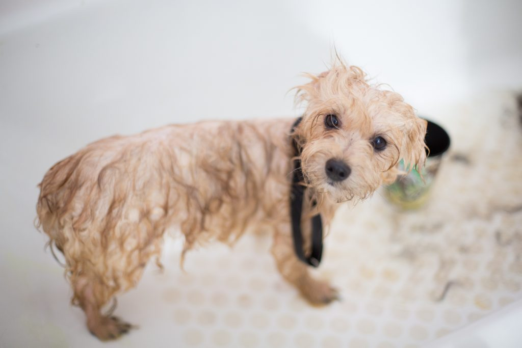 12 Gorgeous Gifts for New Puppy Parents, puppy bath, dog bath, wet dog