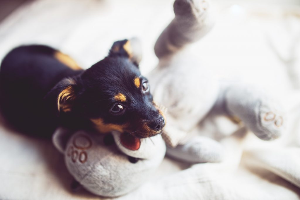 12 Gorgeous Gifts for New Puppy Parents, puppy snuggle toy