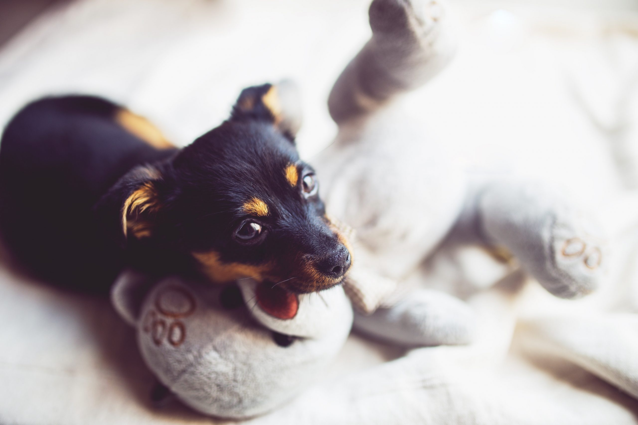 12 Gorgeous Gifts For New Puppy Parents Hey Djangles