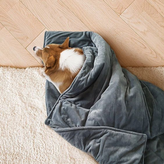 12 Gorgeous Gifts for New Puppy Parents, weighted pet blanket, anti-anxiety blanket for dog