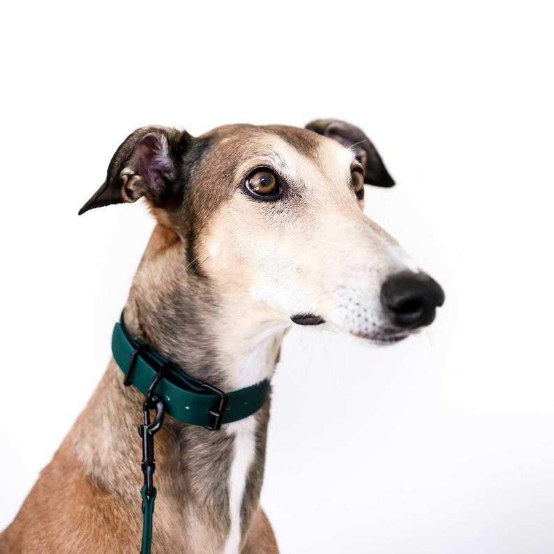 ADORABLE HUNTER GREEN DOG COLLARS AND ACCESSORIES – Hey, Djangles. heydjangles.com – designer dog collar, dark green biothane dog collar and leash set, vegan leather dog collar, waterproof dog collar, greyhound, image via Sighthound Squad – Etsy.