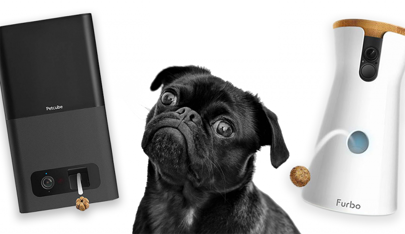 12 Gorgeous Gifts for New Puppy Parents, treat dispensing dog cameras, pug dog