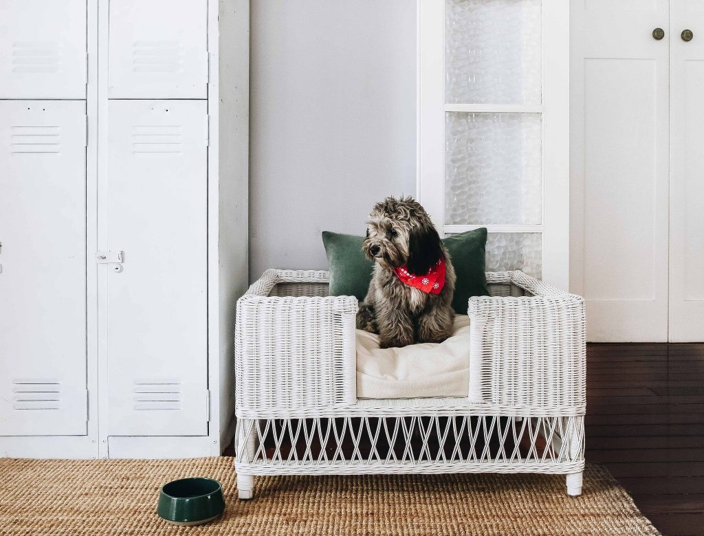 ROUND-UP: 25+ Rattan and Wicker Dog Beds and Baskets You'll Love feat. Woven Dog Bed from Byron Bay Hanging Chairs (Australia)