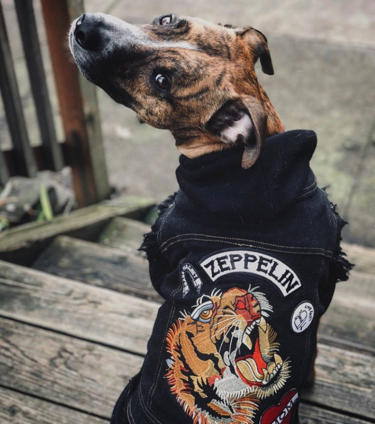145 Rock and Roll Dog Names feat. Denim Dog Vest with Patches via PetHaus on Etsy.