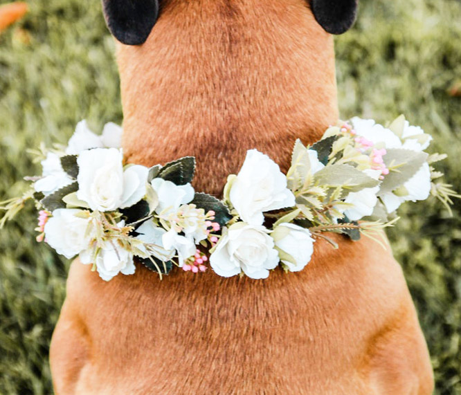 doggy wedding attire, dogs in wedding photos, dog floral collar