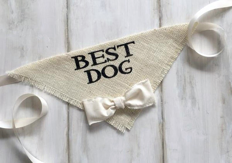 doggy wedding attire, dogs in wedding photos, 'best dog' dog bandana
