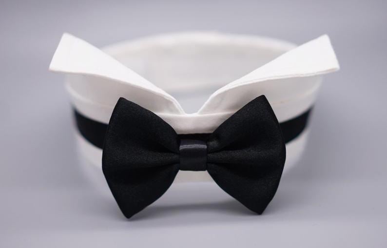 doggy wedding attire, dogs in wedding photos, satin dog collar and bow tie