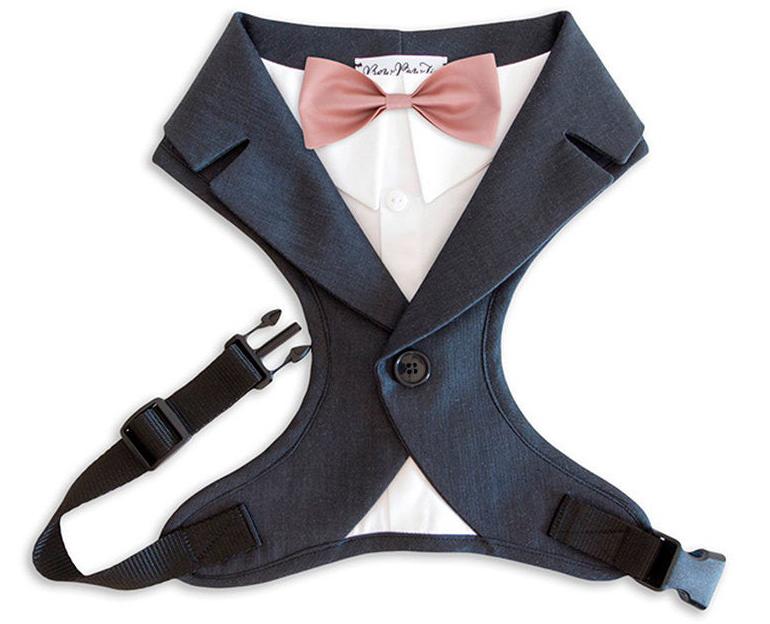 doggy wedding attire, dogs in wedding photos, dog tuxedo harness