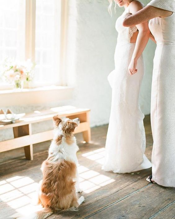 How to Include your Dogs in your Wedding Photos (30+ Sweet Pics) – heydjangles.com, doggy wedding attire, dogs in wedding photos, Border Collie #doglover #dogsatweddings #weddingdog