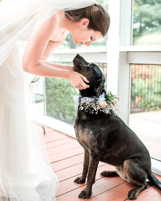 How to Include your Dogs in your Wedding Photos (30+ Sweet Pics) – heydjangles.com, doggy wedding attire, dogs in wedding photos #doglover #dogsatweddings #weddingdog