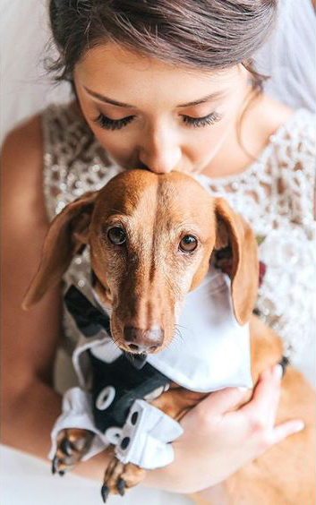 How to Include your Dogs in your Wedding Photos (30+ Sweet Pics) – heydjangles.com, doggy wedding attire, dogs in wedding photos, Dachshund #doglover #dogsatweddings #weddingdog