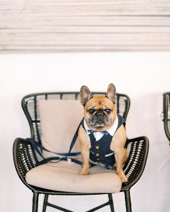 How to Include your Dogs in your Wedding Photos (30+ Sweet Pics) – heydjangles.com, doggy wedding attire, dogs in wedding photos, French Bulldog, Frenchie #doglover #dogsatweddings #weddingdog