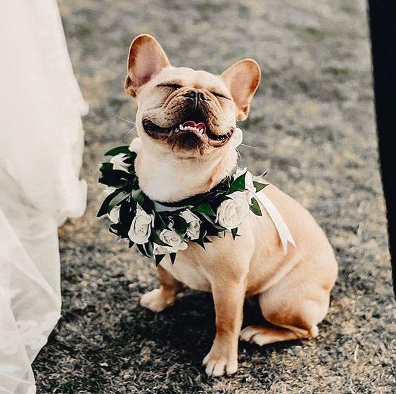 How to Include your Dogs in your Wedding Photos (30+ Sweet Pics) – heydjangles.com, doggy wedding attire, dogs in wedding photos, French Bulldog, Frenchie #doglover #dogsatweddings #weddingdog