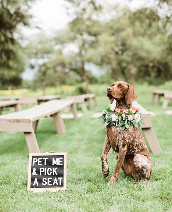 How to Include your Dogs in your Wedding Photos (30+ Sweet Pics) – heydjangles.com, GSP, doggy wedding attire, dogs in wedding photos #doglover #dogsatweddings #weddingdog