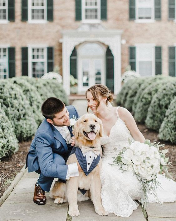 How to Include your Dogs in your Wedding Photos (30+ Sweet Pics) – heydjangles.com, doggy wedding attire, dogs in wedding photos, Golden Retriever #doglover #dogsatweddings #weddingdog