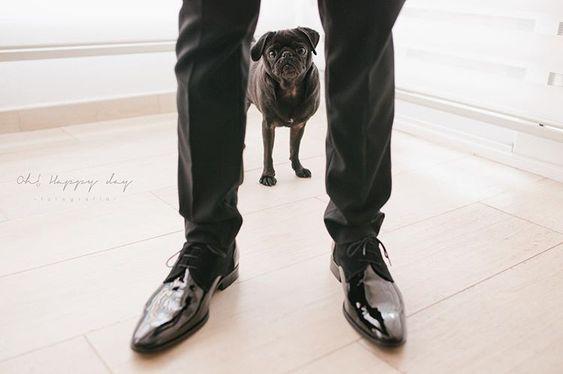 How to Include your Dogs in your Wedding Photos (30+ Sweet Pics) – heydjangles.com, Pug, doggy wedding attire, dogs in wedding photos #doglover #dogsatweddings #weddingdog