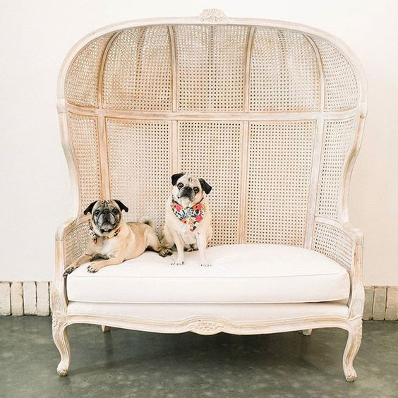 How to Include your Dogs in your Wedding Photos (30+ Sweet Pics) – heydjangles.com, Pugs, doggy wedding attire, dogs in wedding photos #doglover #dogsatweddings #weddingdog