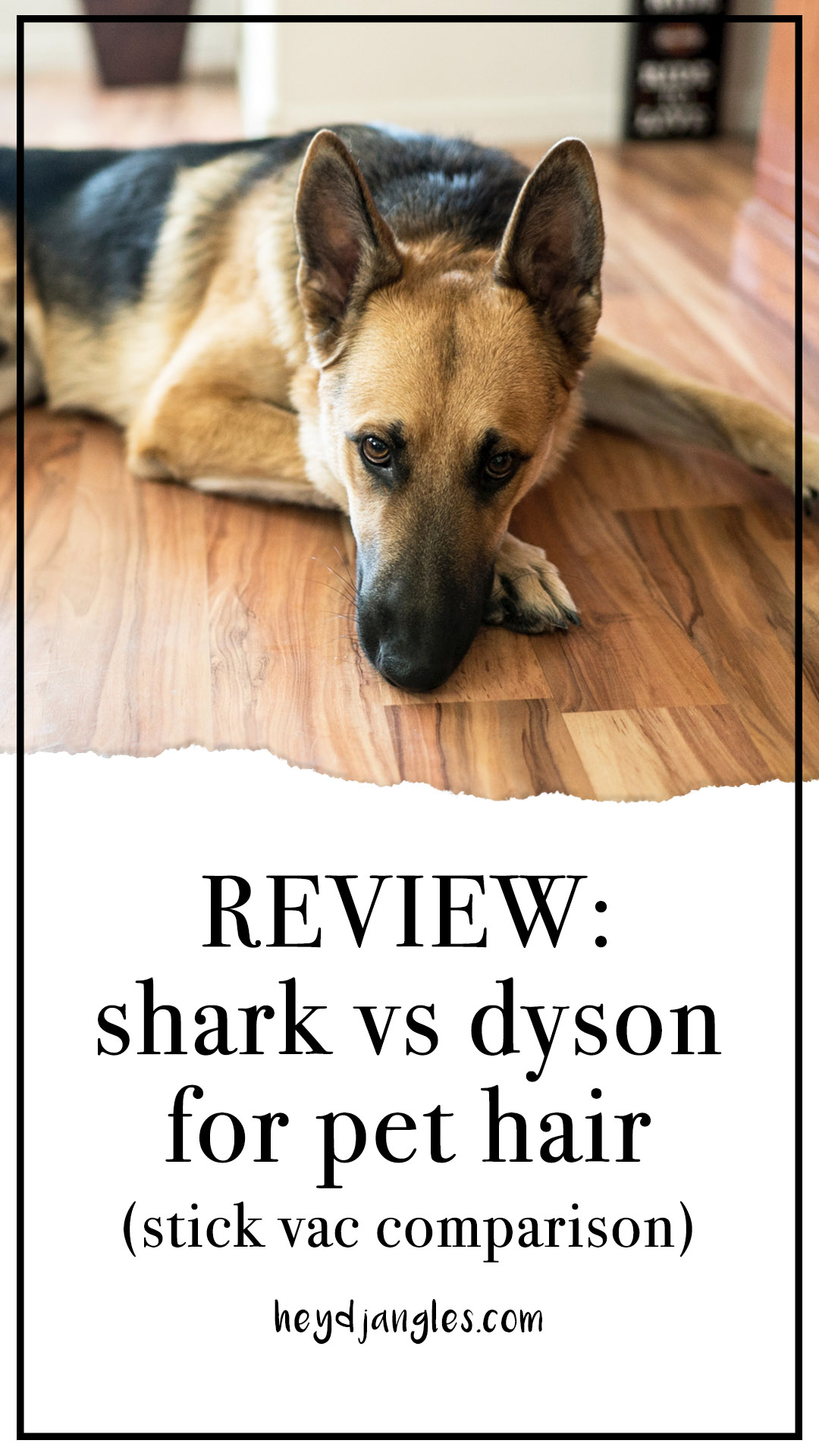 REVIEW: Shark vs Dyson for Pet Hair (Stick Vacuum Comparison) – heydjangles.com, Shark vs Dyson Cordless vacuum review, best stick vacs for pet hair, Dyson V10 Absolute review, Shark ION F80 review. German Shepherd dog.