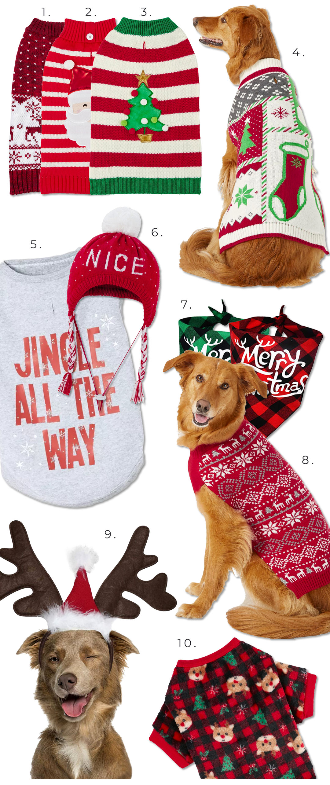 10+ Cute Christmas Costumes for Large Dogs