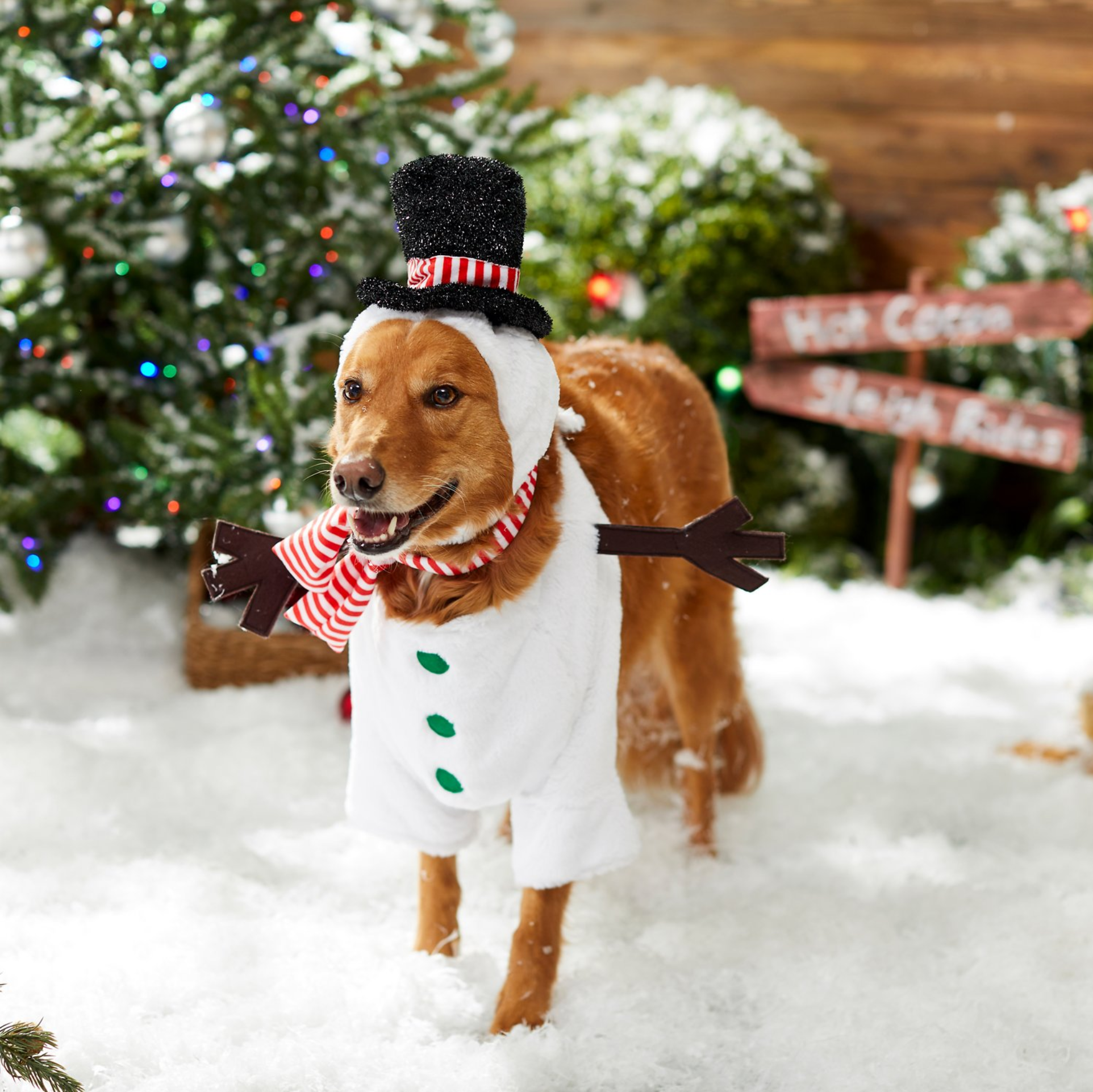 10+ Cute Christmas Costumes for Large Dogs feat. Frisco Front Walking Snowman Dog Costume - up to 3XL (via Chewy)