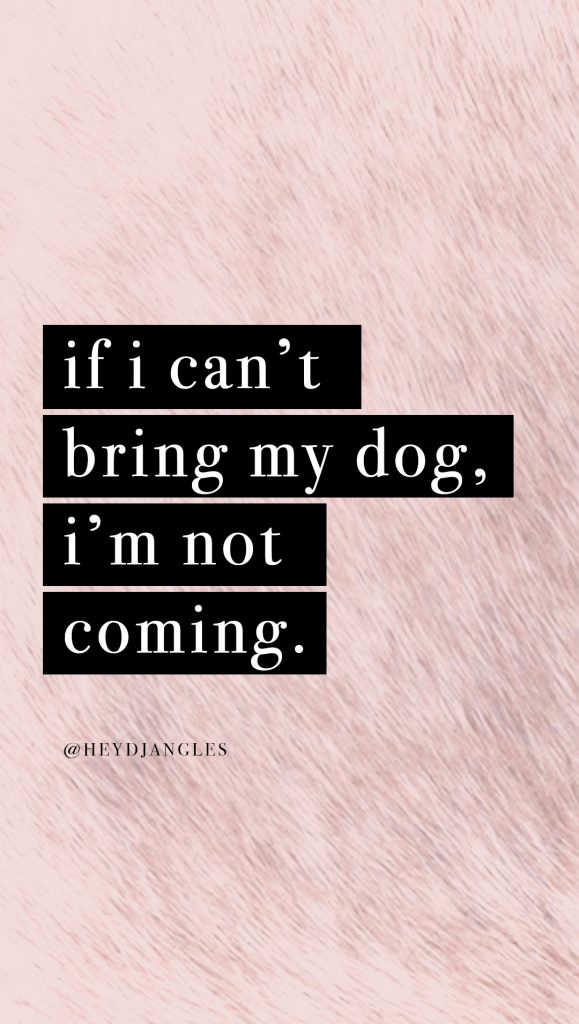 cute dog quote wallpaper for iphone or android, if i cant bring my dog, im not coming