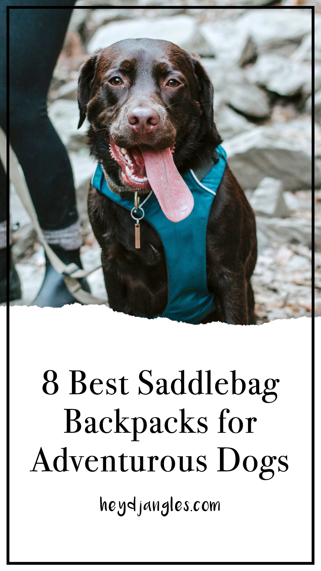 8 Best Saddlebags for Dogs: Backpacks for Adventurous Canines! – heydjangles.com – best dog saddle bags, dog backpacks with saddle bags, tactical dog backpacks, dogs that hike.
