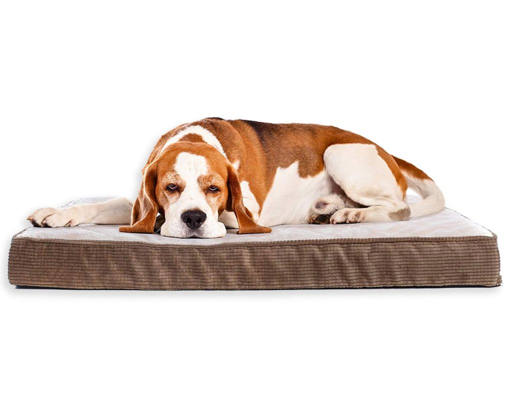 Best Orthopedic Dog Beds for Arthritis - heydjangles.com - memory foam dog bed, Beagle.