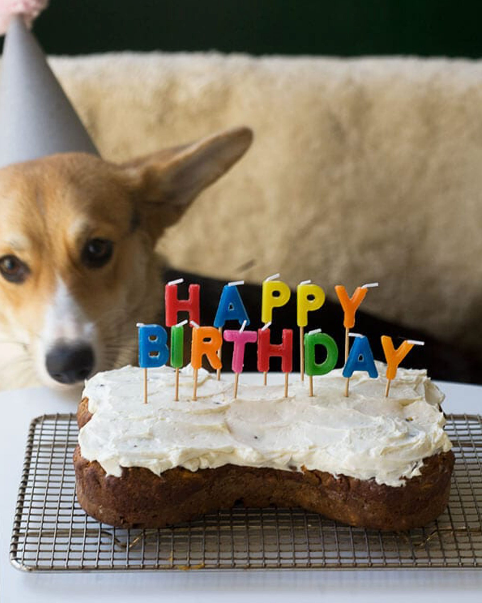 Homemade Dog Birthday Carrot Cake - via A Cozy Kitchen