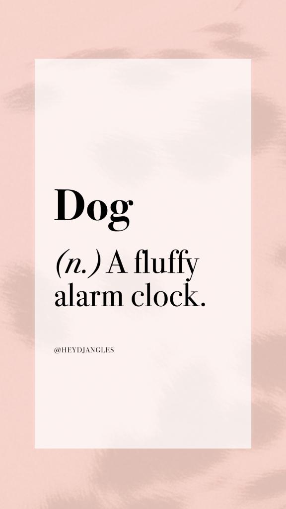 Dog definition - Noun, a fluffy alarm clock.