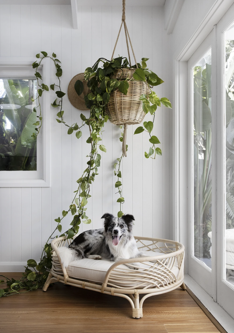 17 Stylish Boho Dog Beds You & Your Fur Kids Will Love - Feat. 'Amber Rattan Pet bed' from The Bee's Knees Collective.