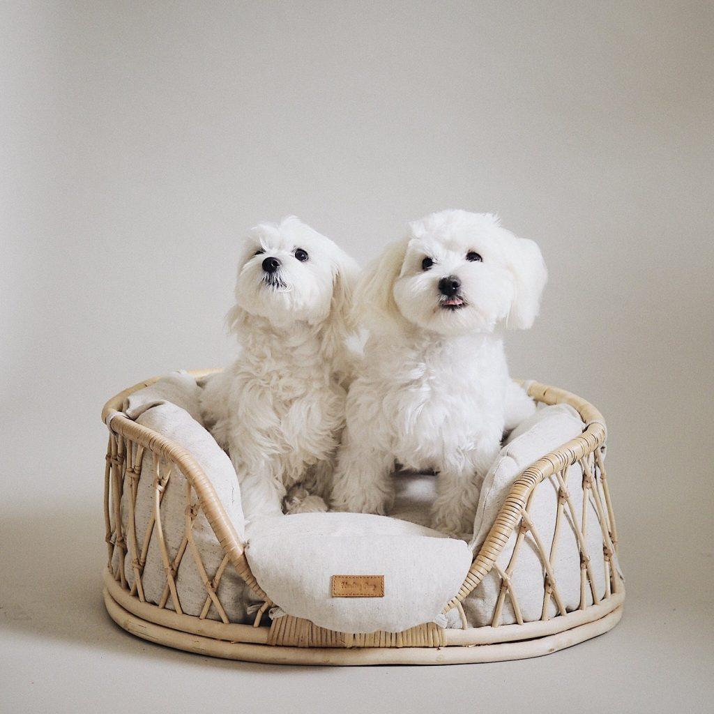 17 Stylish Boho Dog Beds You & Your Fur Kids Will Love