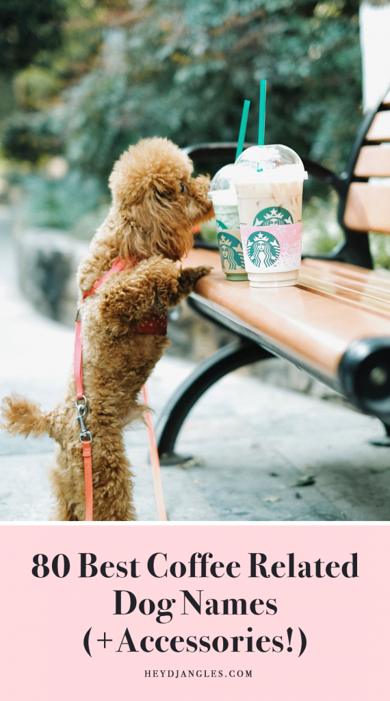 FOR FUN: 80 Best Coffee Related Dog Names and Accessories