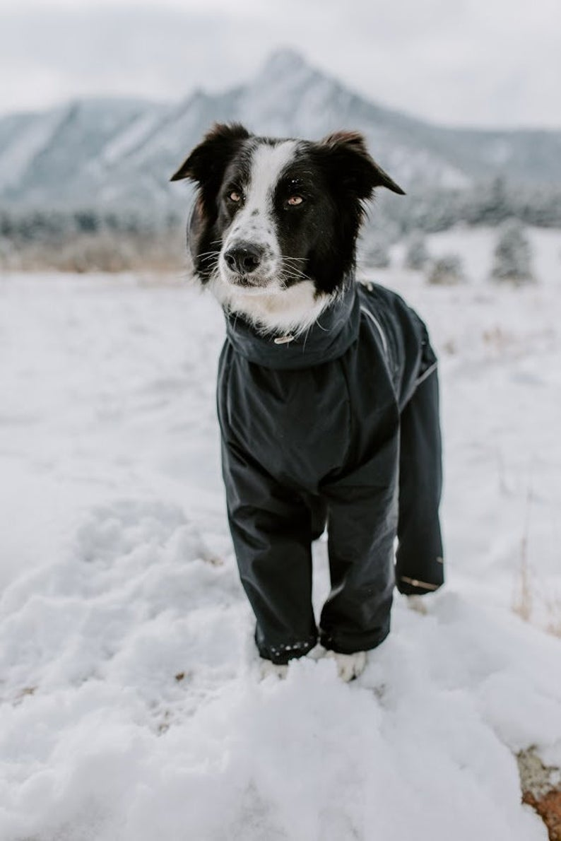 16 Stylish Raincoats for Large Dogs feat. BarkAndGo Black Waterproof Dog Raincoat Full Body Suit via Etsy.