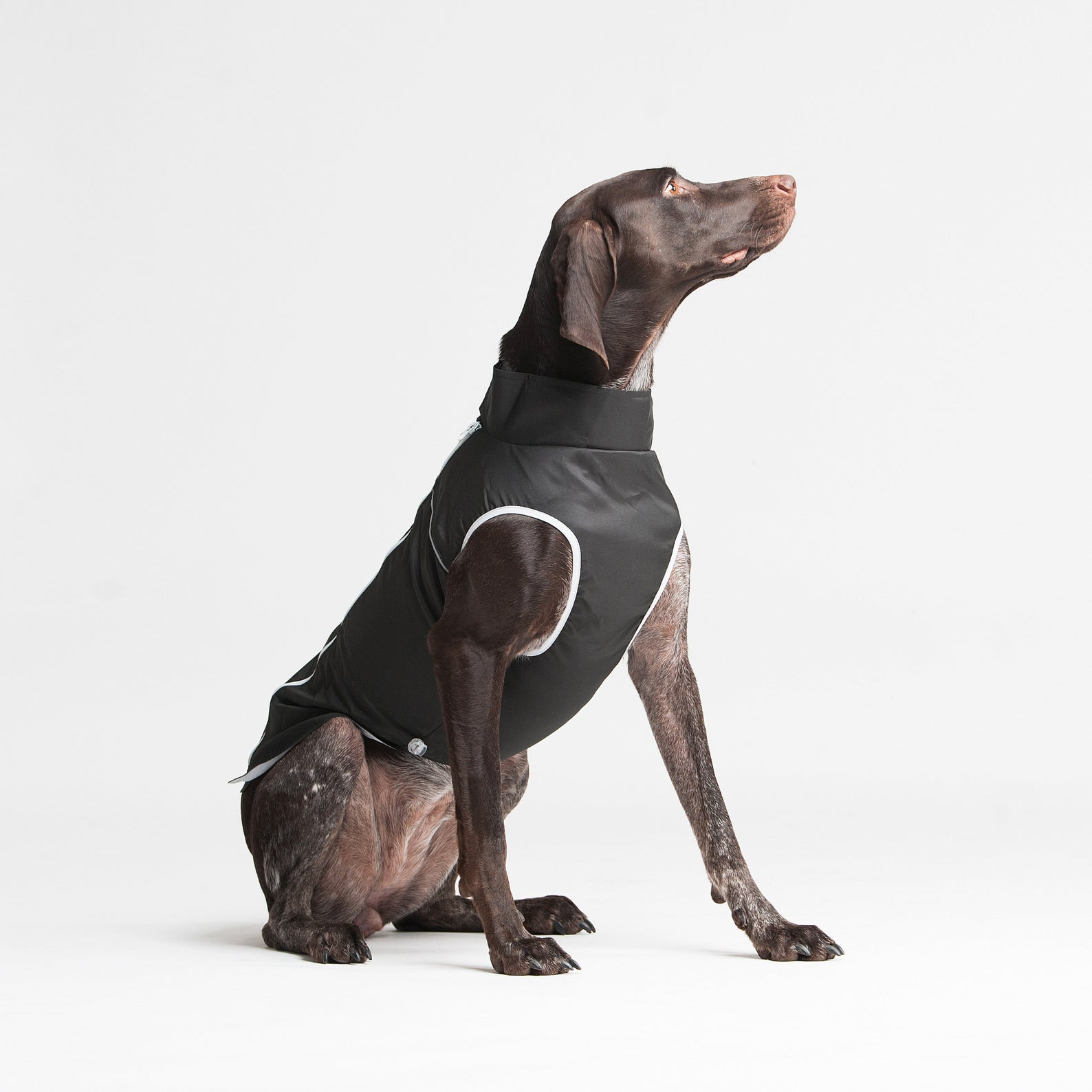 WoofitDogwear Light Rain Jacket for Dogs in Black via Etsy.
